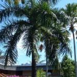 Bali - Bali Hyatt Hotel